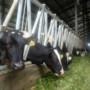 Dongkrak Produksi Susu,  Jatim impor 245 Ekor Sapi