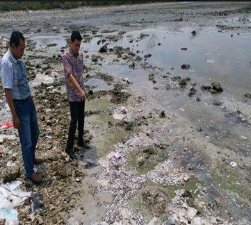 Ribuan Ikan Mati di Sekitaran Pantai Lamongan