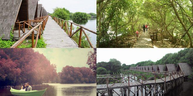 taman mangrove pantai indah kapuk berita lamongan rh beritalamongan com