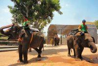 menunggang gajah